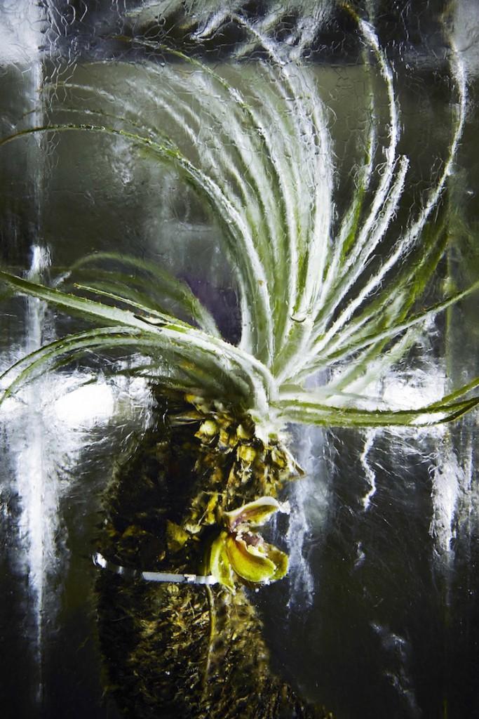 ICED-FLOWERS-Leaves